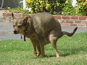 Dog Poop Scooping Service Northland Kansas City